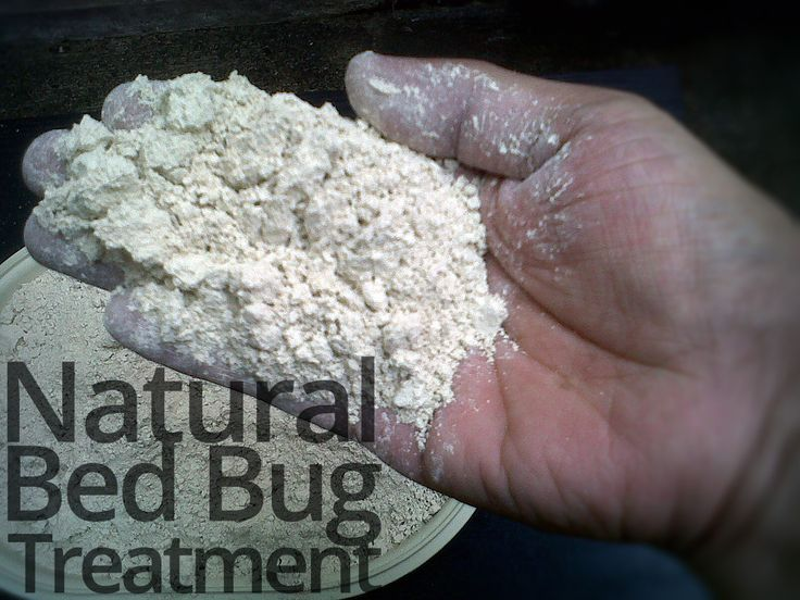 Natural bed bug treatment  #BedBugs #DIY #Natural