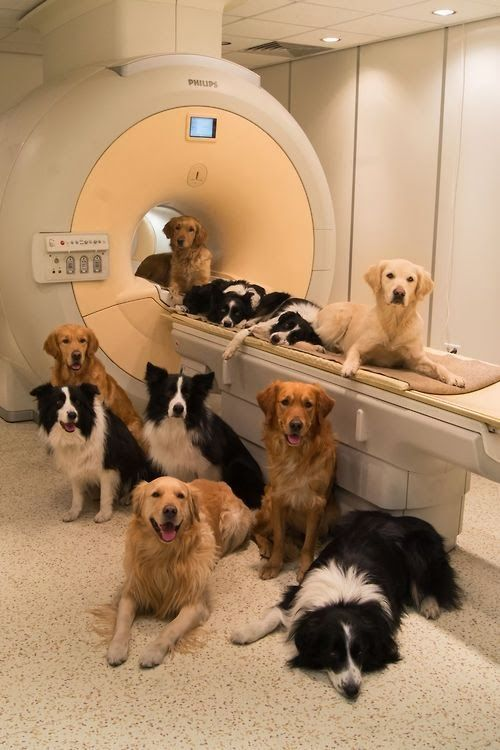 The canine brain reacts to voices in the same way that the human brain.