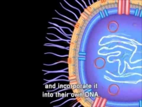 Exchange of genetic material (Gene transfer) transformation - transducti...