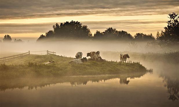 Delta in de klas! - De nieuwe film 'Holland, natuur in de Delta' van de makers van De Nieuwe Wildernis, is een (her)ontdekking van Nederland. Een ode aan onze rivieren en kustgebied en de rijke natuur die zij onze delta brengen, in alle kracht, raadselen en schoonheid. Het gratis lesmateriaal Delta in de klas!, brengt obv clips uit de film de delta in de klas. Docenten kunnen het lesmateriaal gratis gebruiken: http://deltaindeklas.nl/