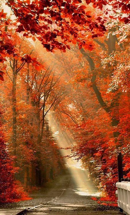 Way to fall into autumn THIS IS FAII IS SO BEAUTIFUL LOOK HOW THIS SCENE IS CALLING YOU TO COME.....