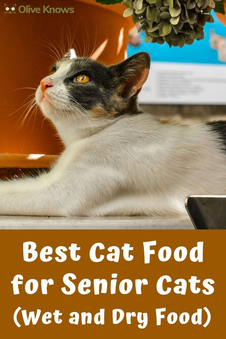 Best Cat Food For Senior Cats Wet And Dry Food Oliveknows Senior Cat Senior Cat Food Best Cat Food