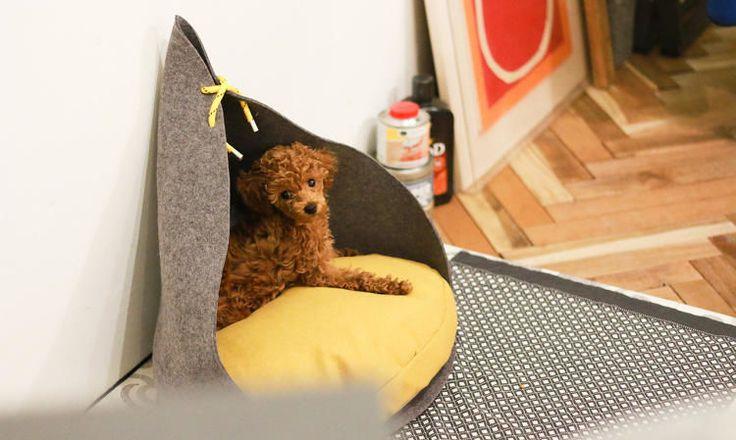 Contemporary Dog Houses : bad marlon