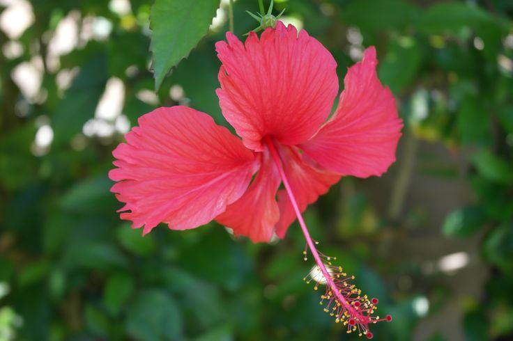 86 Best Dominican Republic Images On Pinterest Dominican Republic National Parks And State Parks