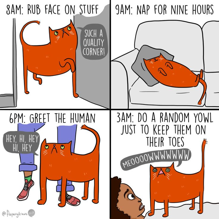 Best August Buzzfeed Images On Pinterest Funny - Illustrator puts funny twist on seriously relatable everyday situations