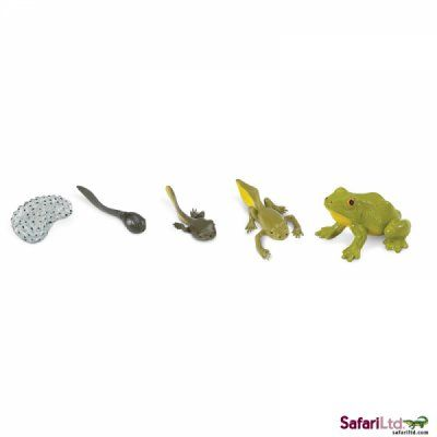 life cycle of a frog set 1
