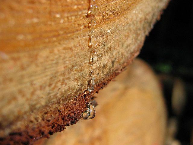 Krkonose 9/08 | Flickr - Photo Sharing!
