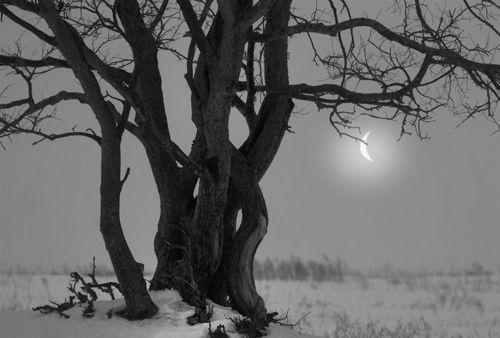 Tree + Moon