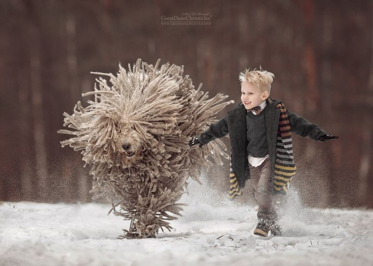 Komondor - it is really cool! by Andy Seliverstoff - Photo 187694675 / 500px