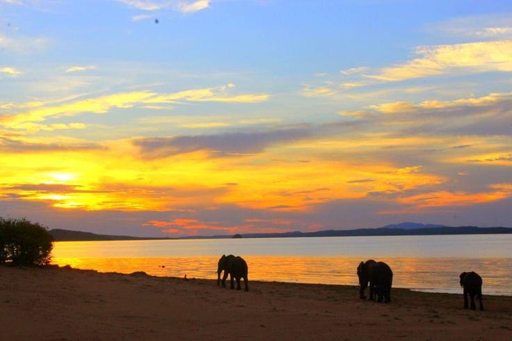 Elephants, Bumi Hills, #Kariba.  http://theexplorerclubafrica.com/properties/bumi-hills-safari-lodge-spa.php