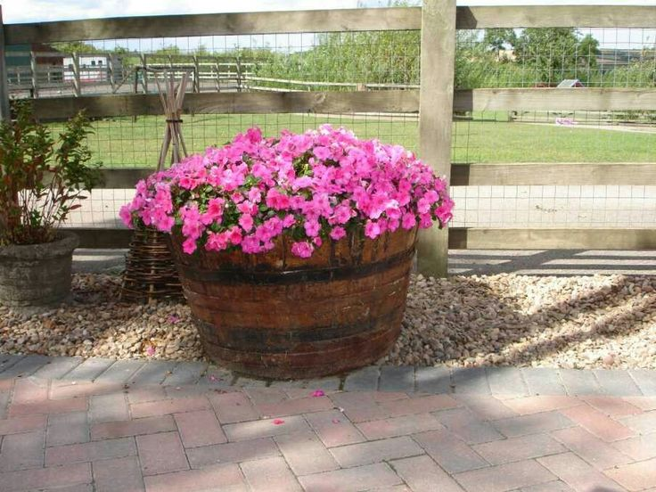 Everethyng That You Should Know About Wooden Barrel Planter : Wooden Barrel  Planter Ideas.
