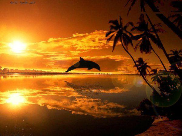 1000 id es sur le th me coucher soleil sur pinterest couchers de soleil etretat france et soleil - Rencontre juste pour coucher ...