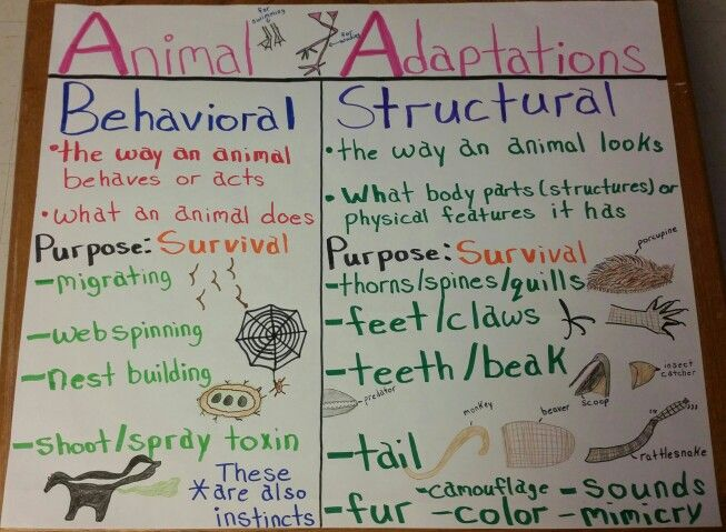 Animal Adaptations Anchor Chart. This could either be done as a whole class or individually and could be used as a way to review/assess what the students know and have been learning about animal adaptations.