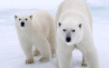 Vamos proteger os ursos e toda fauna polar! Diga não a exploração de petróleo! Obrigado por defender o Ártico