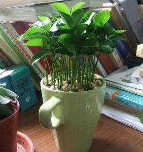 Plante sementes de limão e deixe sua casa super cheirosa!