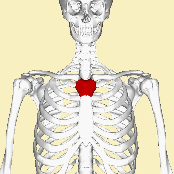23 best Anatomy images on Pinterest   Anatomy, Human ...