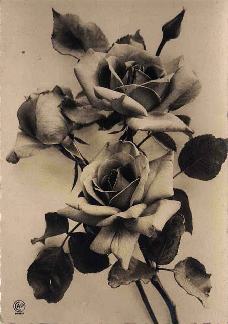 """Chanson """"Les roses blanches"""" (1926).                          Cie des Arts Photomécaniques, Paris"""
