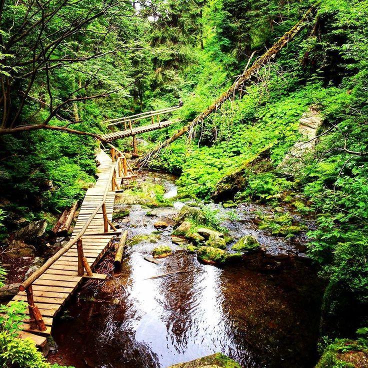 Naučná stezka kolem Bílé Opavy je plná lávek žebříků a nádherné přírody kolem. Doporučujeme jít od Karlovy Studánky k chatě Barborka. #czechrepublic #jeseniky #bilaopava #naucnastezka #vylet #hike #cestovani #cestujeme #travel #nature #priroda #wood #forest #voda #river #mountain #hory #ceskarepublika #travelphotography #instalike #instatravel #blogger #sbatuzkem