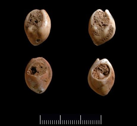 Deliberate holes and a coating of red coloring are evident on four tiny snail shells recently found in a cave in Morocco. At 82,000 years old, the shells are the ►oldest known examples of human jewelry◄, researchers say, surpassing previous confirmed reports of ancient beads by about 10,000 years.