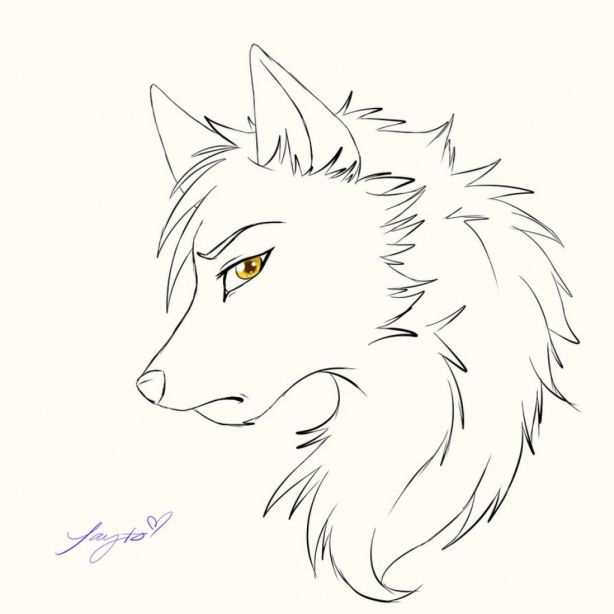 15 Drawings Of Anime Wolves Anime Wolf Drawing Wolf Sketch Cartoon Wolf Drawing