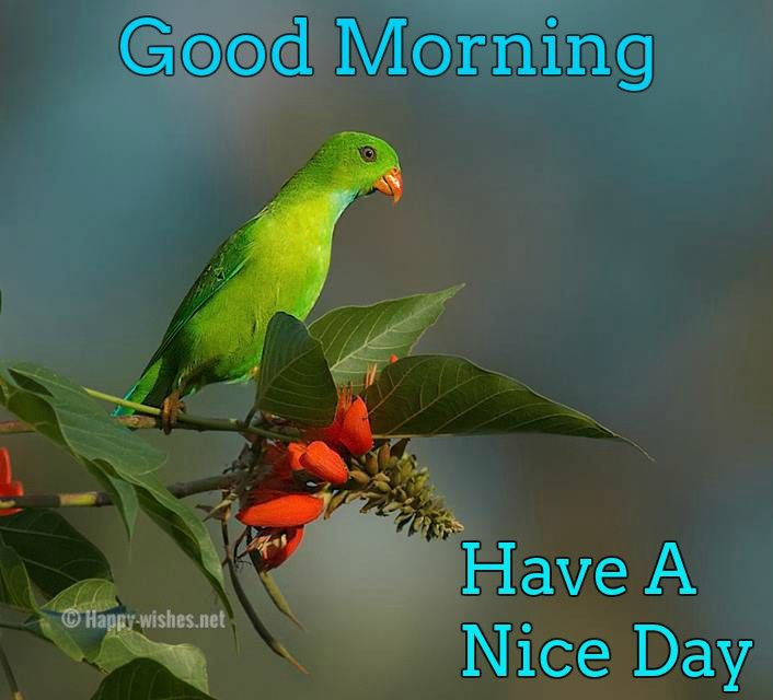 Related Image Good Morning Wishes Good Morning Good Morning Images