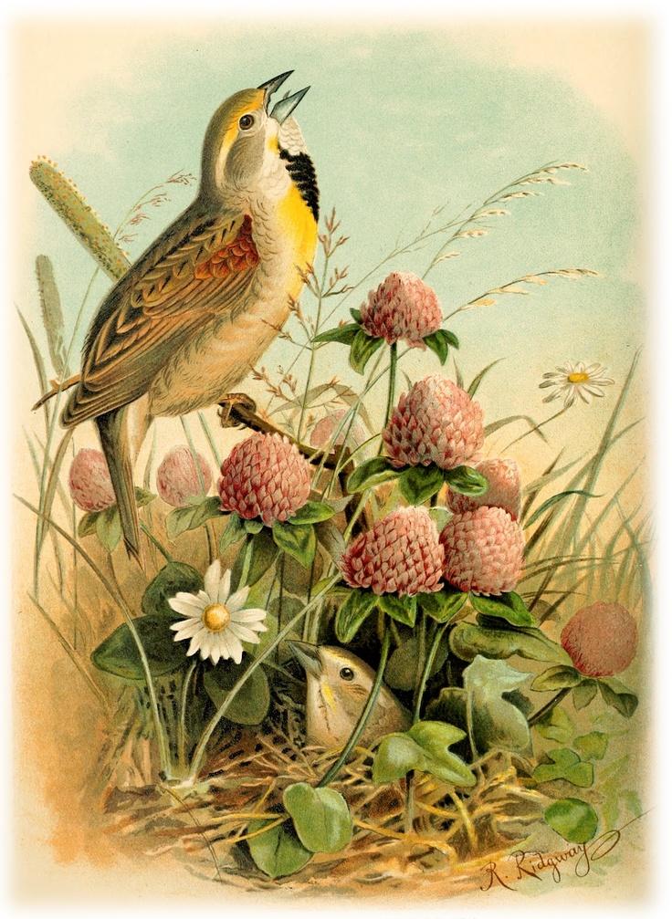 этом открытки с птицы сколько людей фамилией