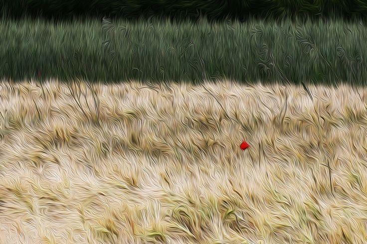 Campo di grano by Angela Zuppa on 500px