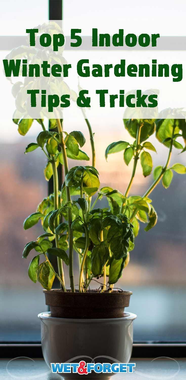 From Houseplants To Veggies The 5 Keys To Indoor Winter Gardening