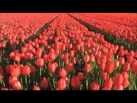 "▶ The Four Seasons VIVALDI ""~♫~""""~♫~""SPRING""~♫~"" La Primavera-HQ beautiful romantic flowers - YouTube"