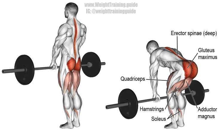 Romanian deadlift. A major compound pull exercise! Main muscles worked: Gluteus Maximus, Hamstrings, Quadriceps, Adductor Magnus, Soleus, and Erector Spinae. Highly recommended!