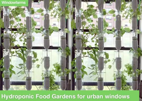Vertical gardening with reused plastic bottles. Save space, clean your air, grow something!
