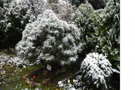 Občanské sdružení přátel pietního parku Draháň - Fotoalbum - Fotogalerie - ...zima přichází (2016) - 4