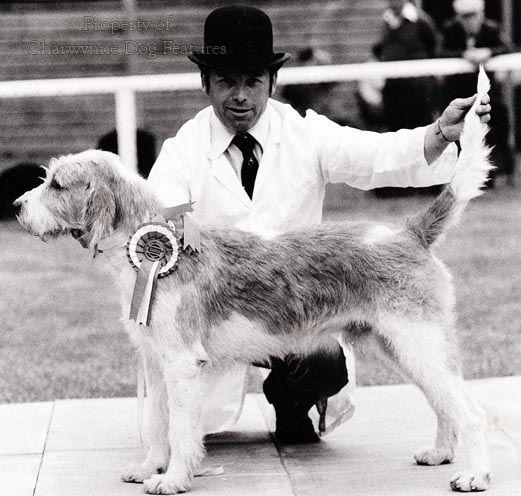 Welsh Hound.