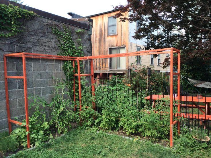 Image Result For Vegetable Garden Tomato Trellis Clips