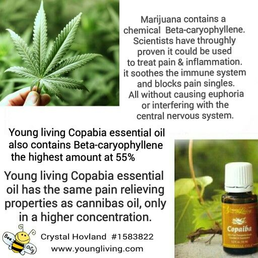 Young living Copabia essential oil  contains Beta-caryophyllene  the highest amount at 55%