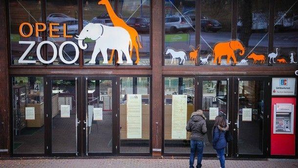 #Opel-Zoo wegen Vogelgrippe geschlossen - FAZ - Frankfurter Allgemeine Zeitung: FAZ - Frankfurter Allgemeine Zeitung Opel-Zoo wegen…
