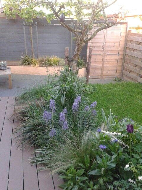 Kleine tuin in het voorjaar. Met vlonder,  terras en gazon! Tulpen,  leliegras en gebroken hartje.  Siergrassen komen op. Leilindes op achtergrond