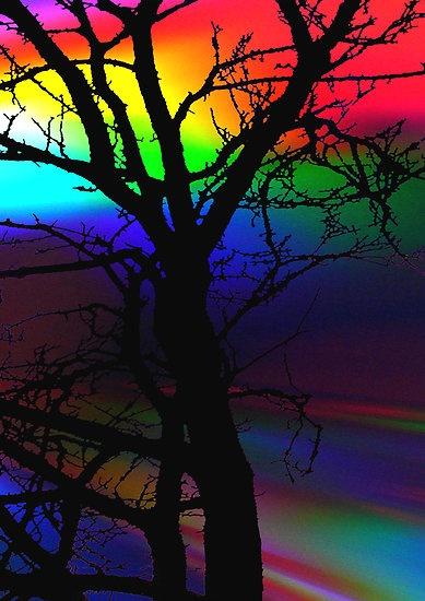 Rainbow tree: Rainbows Trees, Art Colors Natural, Rainbows Colors, Colors Colors Colors, Rainbows Sunsets, Beautiful Multicolored, Rainbows Sky, Colors Things, Colors Life
