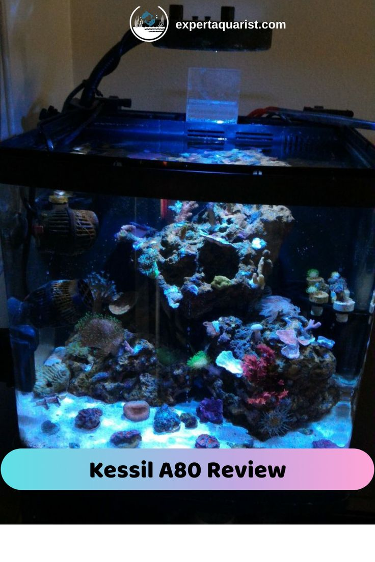 Kessil A80 Review : Tuna Blue LED Light with Mini Gooseneck