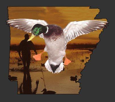 Duck hunting in Arkansas