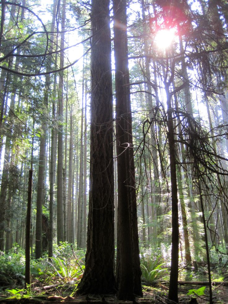 Pacific Spirit Regional Park | Oh My Vancouver!