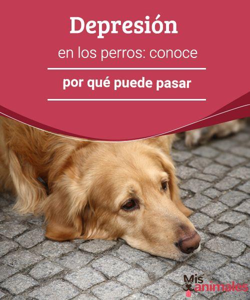 Depresión en los perros: conoce por qué puede pasar  Al igual que las personas, los canes también pueden deprimirse. Te contamos las principales causas de la depresión en los perros. #salud #depresión #perros #razones