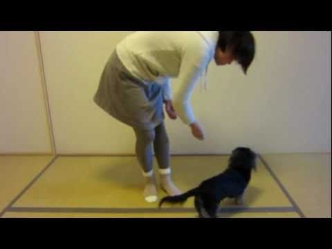 learning how to train a dog to help the blind The internet's #1 dog training  i want to help you to help your dog—and  give your dog the training he so desperately needs today and enjoy learning top .