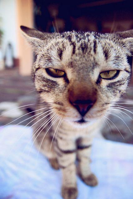 Hey … I'm not a morning cat …