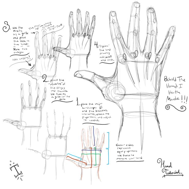 How to draw hand anatomy