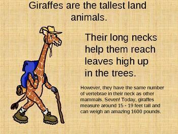 Fun Facts About Giraffes | Giraffes - Fun Facts about the Life of a Giraffe PowerPoint ...