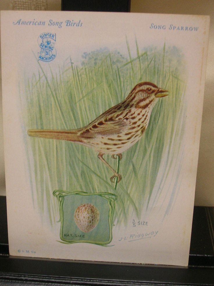 Vtg Singer Sewing Machine Advertising Song Sparrow Art Print Signed J L Ridgway #SINGER