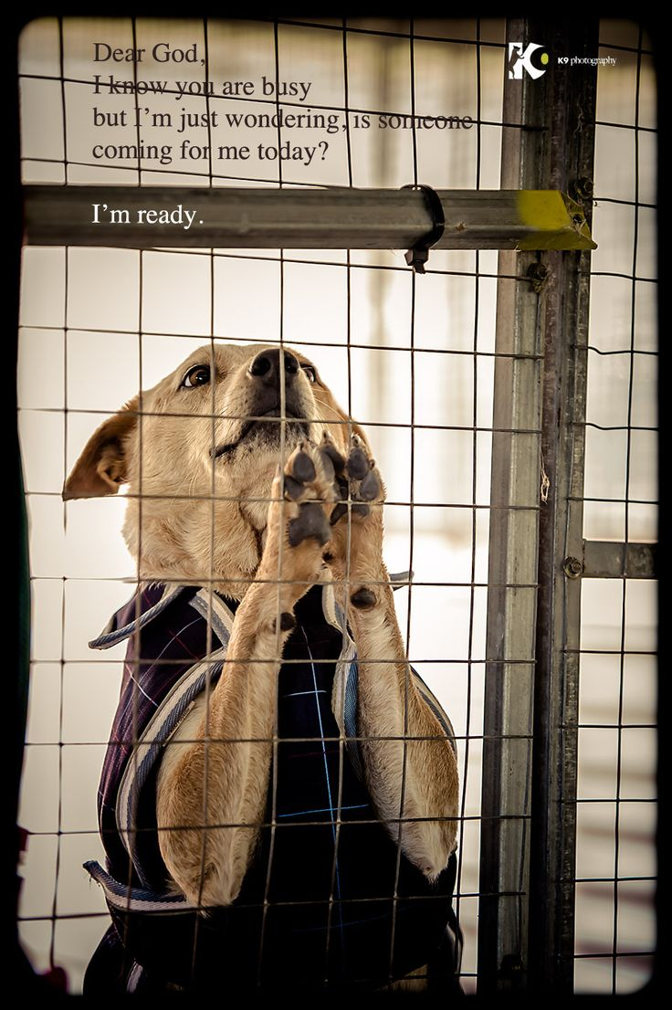"Shelter dog's prayer "" Dear God, I know you are busy but i'm just wondering, is someone coming for me today? I'm ready.""    Trina is just one of many dogs waiting for their forever homes at the Animal Welfare League of Queensland, AU"