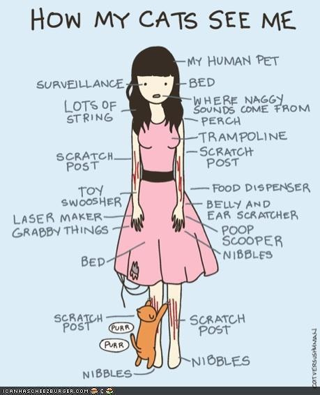 Yep.: Cats, Pet, Catladi, Funny Stuff, So True, Crazy Cat, Cat Ladies, Kitty, Animal