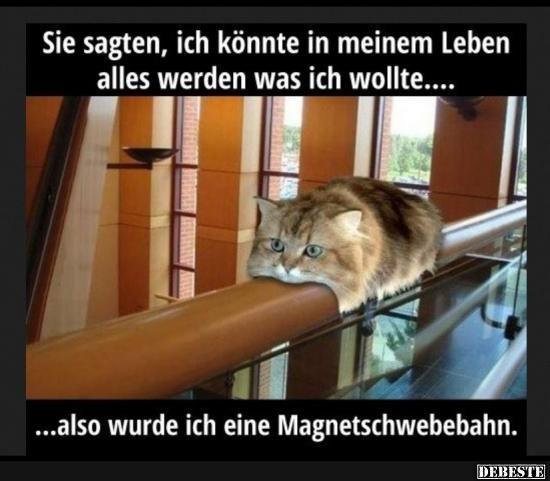 Melhores fotos, vídeos e provérbios e há diariamente novos engraçados no Facebook …   – Katzen